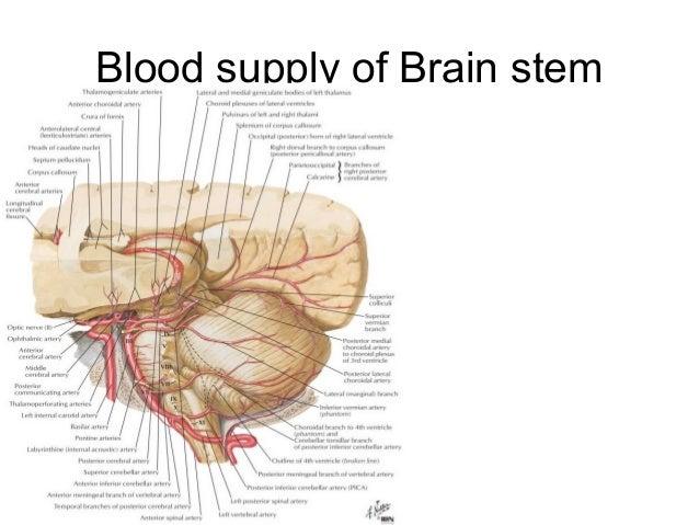 Anatomy & blood supply of Brain