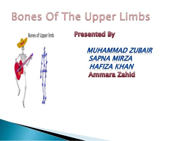 Anatomy bones of upper limbs Slide 2