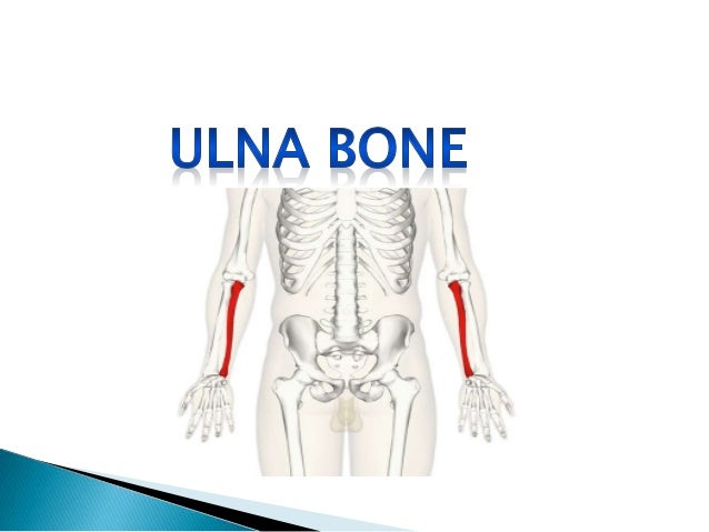 Anatomy Bones Of Upper Limbs