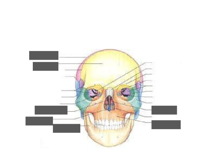Anatomy bone test