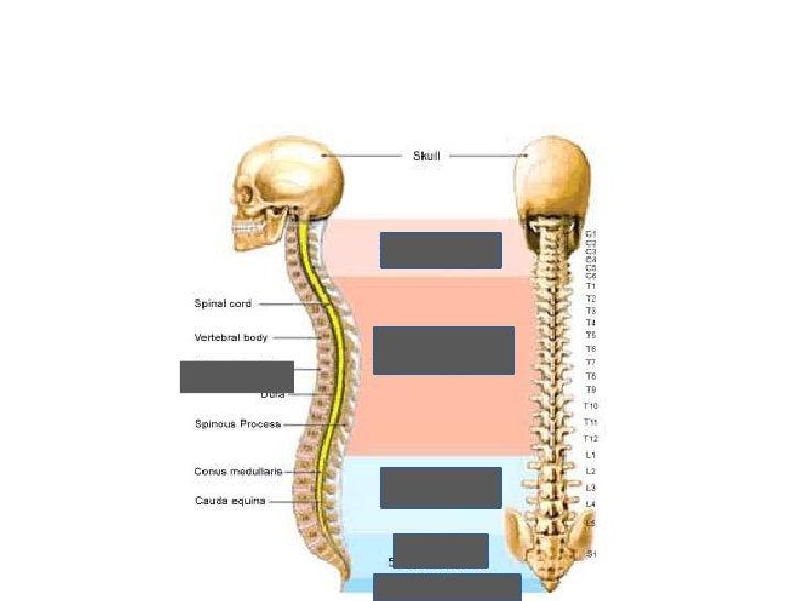 Anatomy bone test