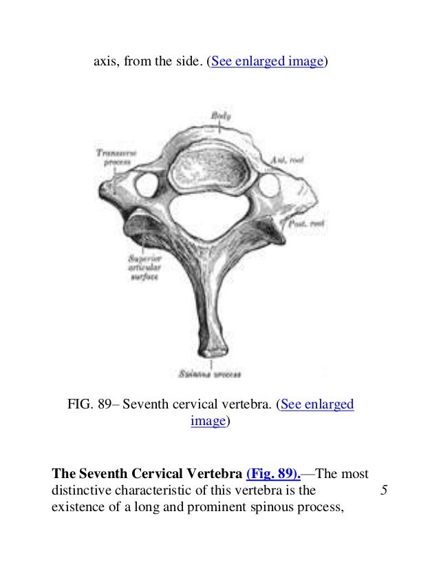 Anatomy cervical vertebra