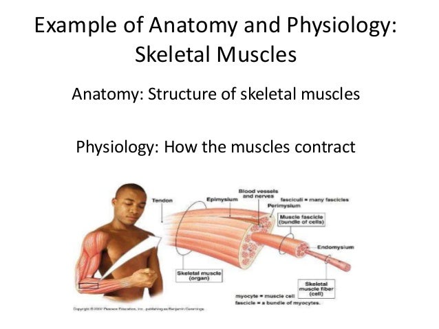 What Is Anatomy And Physiology