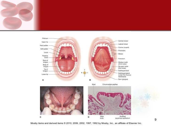 Canine pyloric stenosis