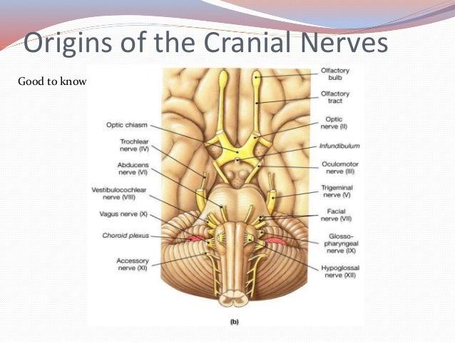 Anatomy Embryology Of Vestibular System