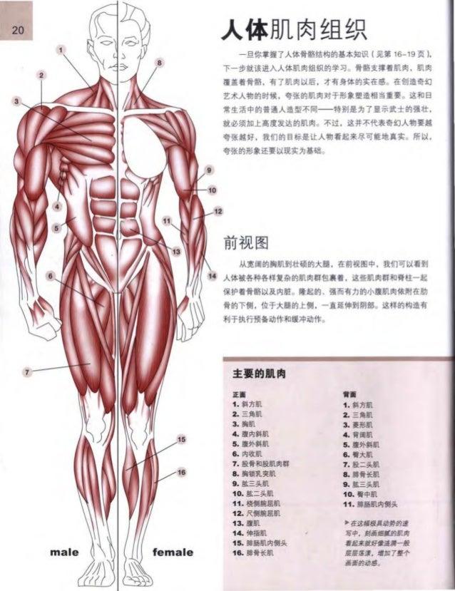Charmant Anatomie Und Physiologie Martini 10. Ausgabe Pdf ...