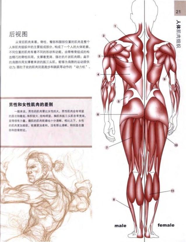 Großzügig Menschliche Anatomie Und Physiologie Marieb 9. Auflage ...