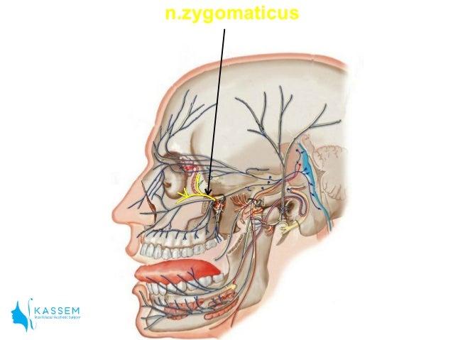 Zygomaticotemporal Foramen Anatomy for local anes...