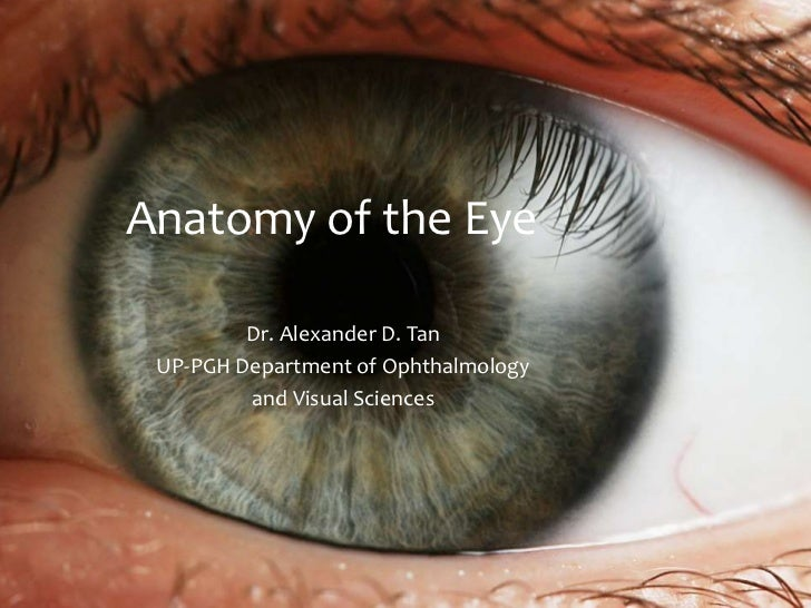Anatomy of the Eye         Dr. Alexander D. Tan UP-PGH Department of Ophthalmology         and Visual Sciences