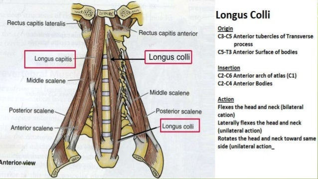 Muscle Origins and Insertion