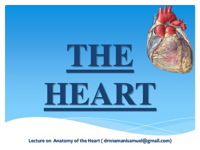 THE HEART Lecture on Anatomy of the Heart ( drnnamanisamuel@gmail.com)