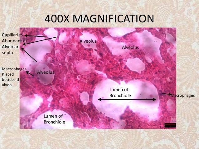 Capillaries structure and function