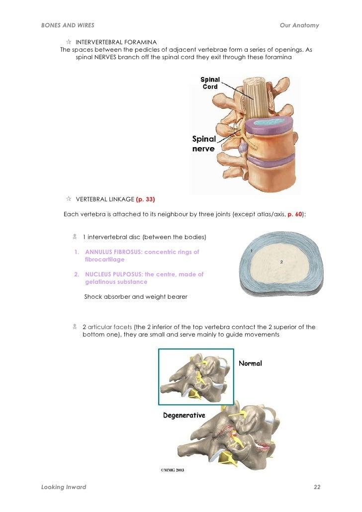 Anatomy Manual
