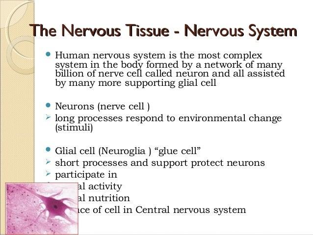 The Nervous Tissue - Nervous SystemThe Nervous Tissue - Nervous System  Human nervous system is the most complex system i...