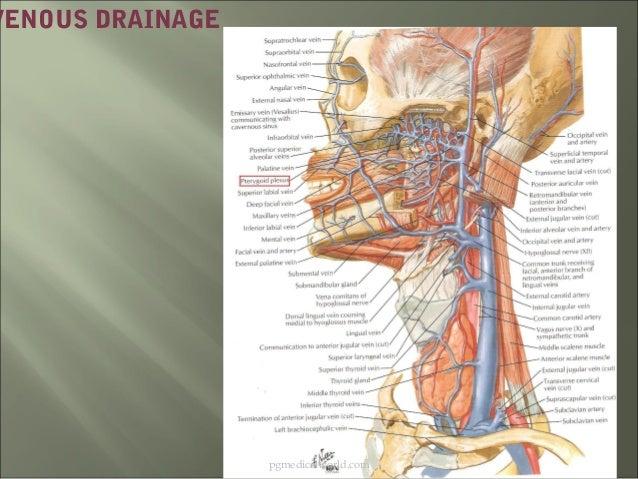 Anatomy n physiology of pharynx 03
