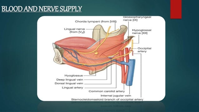 Anatomy Of Oral Cavity