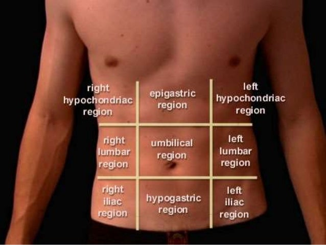 anatomy of abdomen and regions of trunk, Human Body