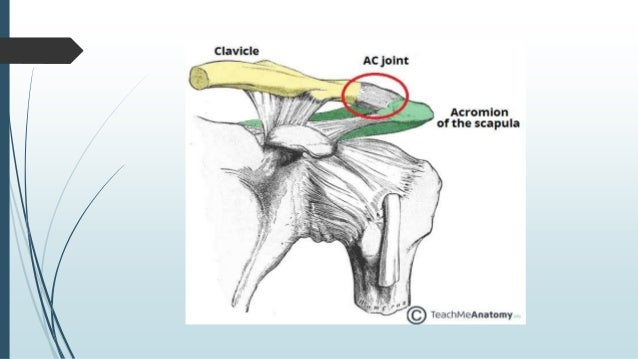 Anatomy of acromioclavicular joint