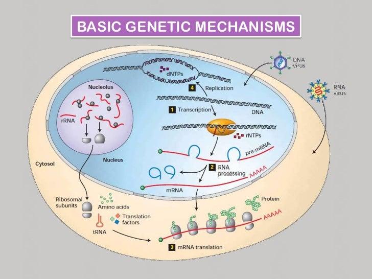 Anatomy of a gene Slide 2