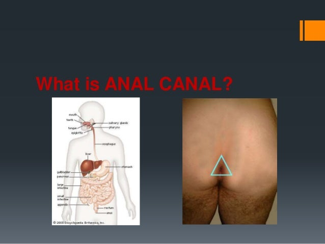 What is anal
