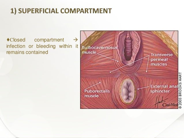Anus bleeding perineum not torture