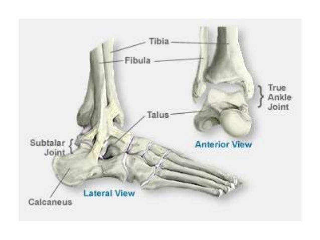 anatomy of ankle joint, Cephalic Vein