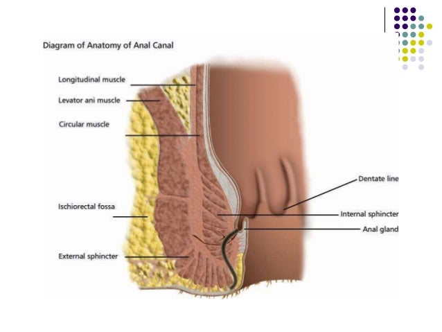 How deep is the anal canal