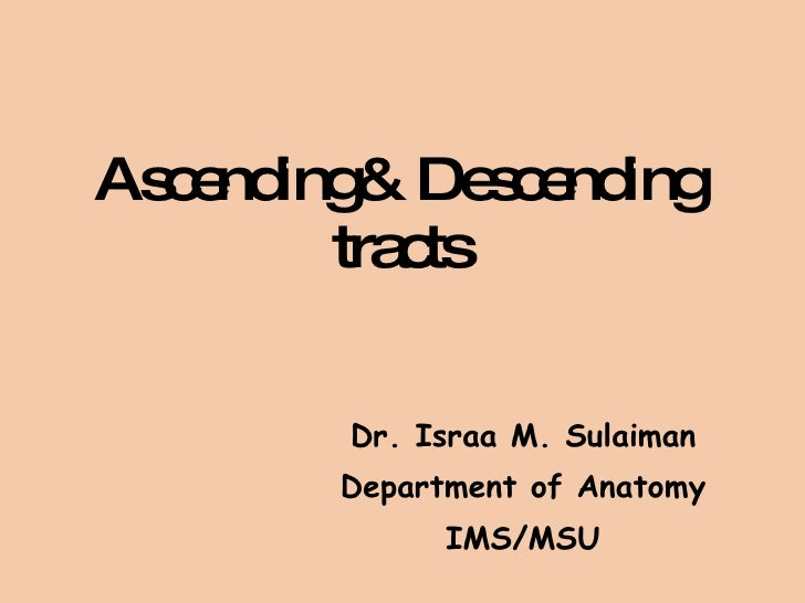 Ascending& Descending tracts Dr. Israa M. Sulaiman Department of Anatomy IMS/MSU