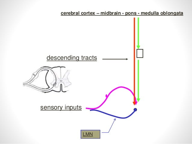 Anatomy of ascending and descending tracts