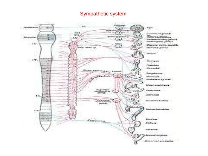 anatomy of autonomic nervous system pdf