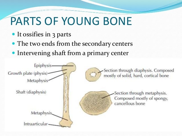 Anatomy of bone and cartilage 1