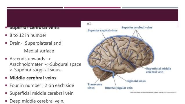 Anatomy of cerebral veins