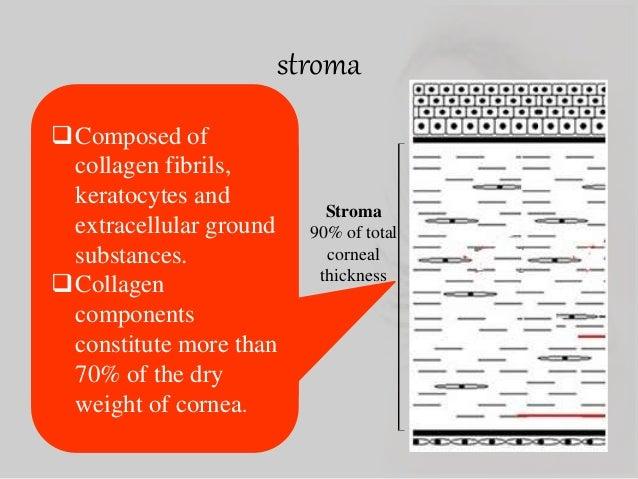Anatomy Of Cornea Of Dr Sohel Mahmud