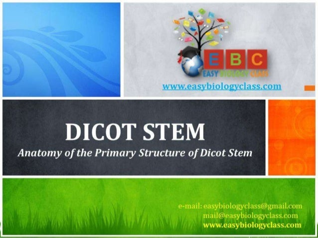 For detailed description of this topic: Dicot Stem: Anatomy, Please Click on.. http://www.easybiologyclass.com/anatomy-of-...