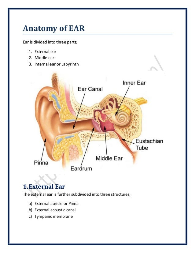 Anatomy of Ear | SurgicoMed.com
