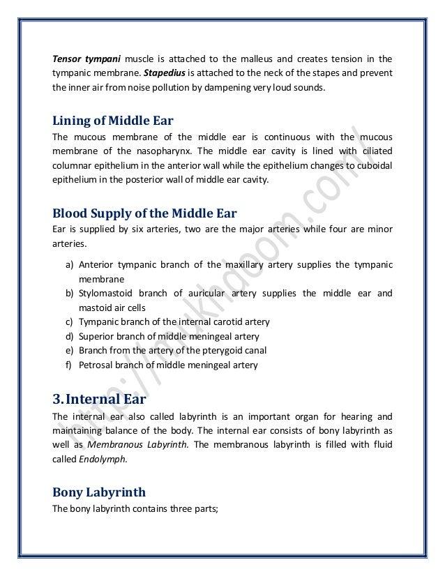 Anatomy of Ear | SurgicoMed.com