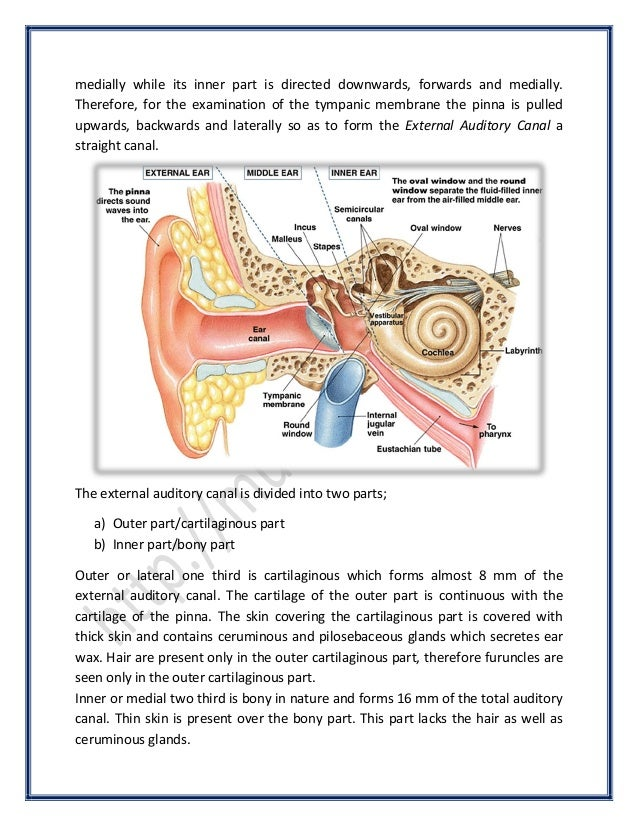 Anatomy Of Ear Surgicomed