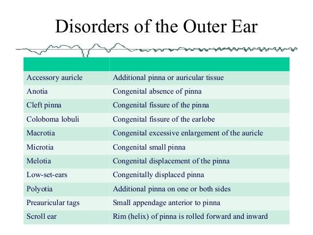 Anatomy Of The Ear