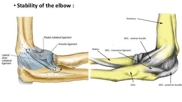 anatomy of elbow and intercondylar fracture of the humerus, Human Body