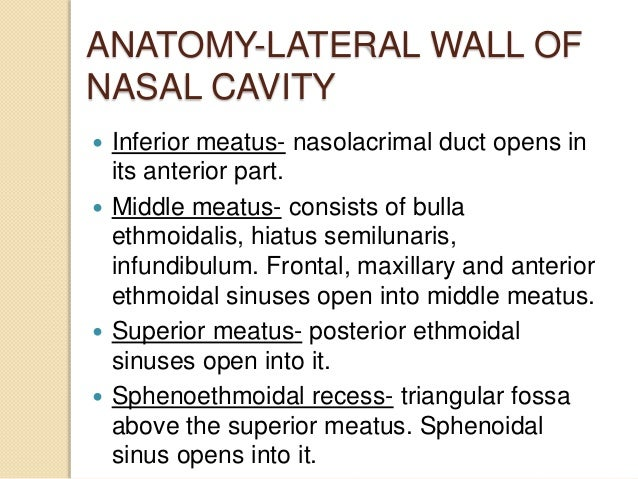Anatomy of nose and para nasal sinuses . by DR. MD ... Inferior Meatus Drainage