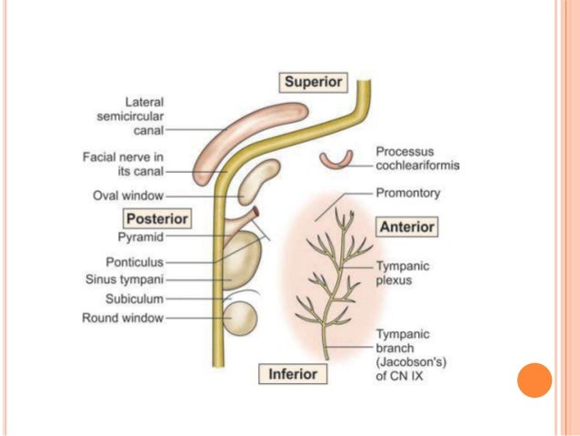 Anatomy of External Ear and Middle Ear
