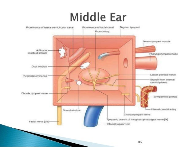 Anatomy of External and Middle Ear