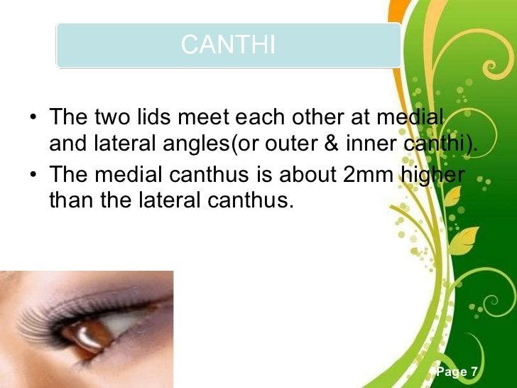 Anatomy of eyelid