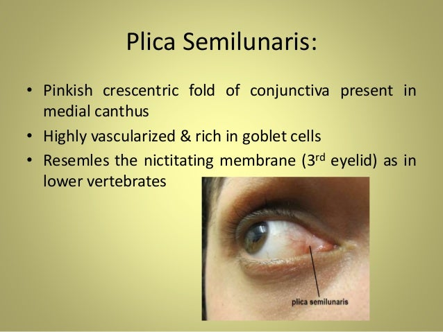 Anatomy of Eyelids & Its Clinical Correlations