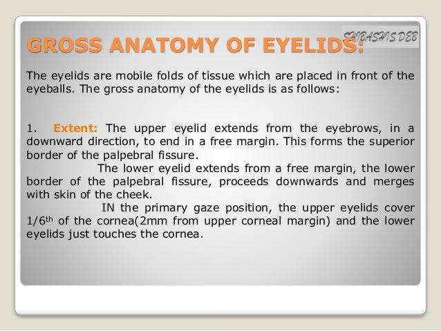 Anatomy of eyelids Slide 3