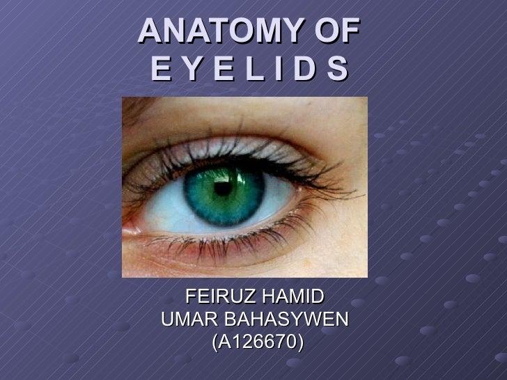 ANATOMY OF E Y E L I D S FEIRUZ HAMID  UMAR BAHASYWEN  (A126670)