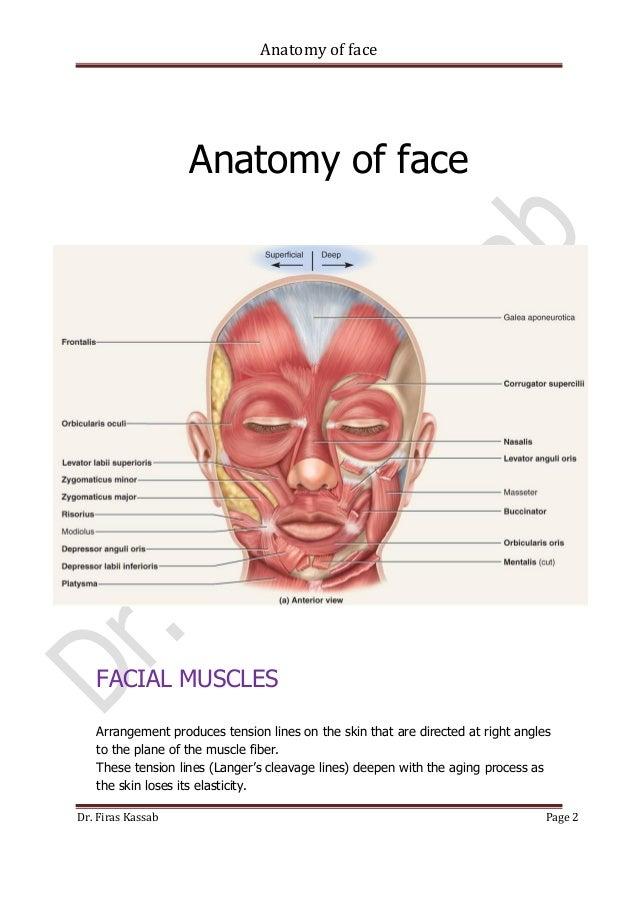 Anatomy Of Face 2 638gcb1480846828