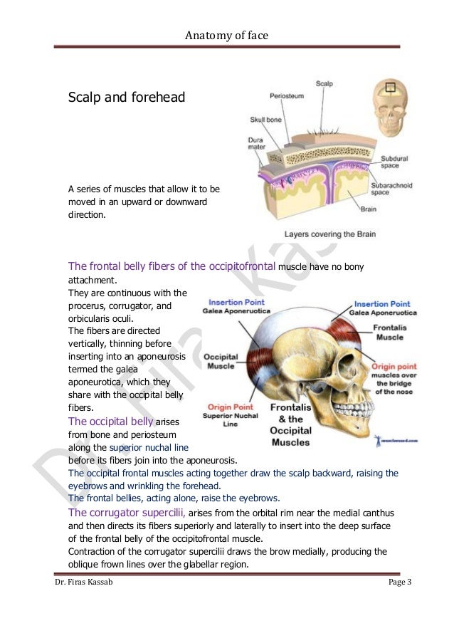 Dorable Layers Of Scalp Anatomy Image - Human Anatomy Images ...