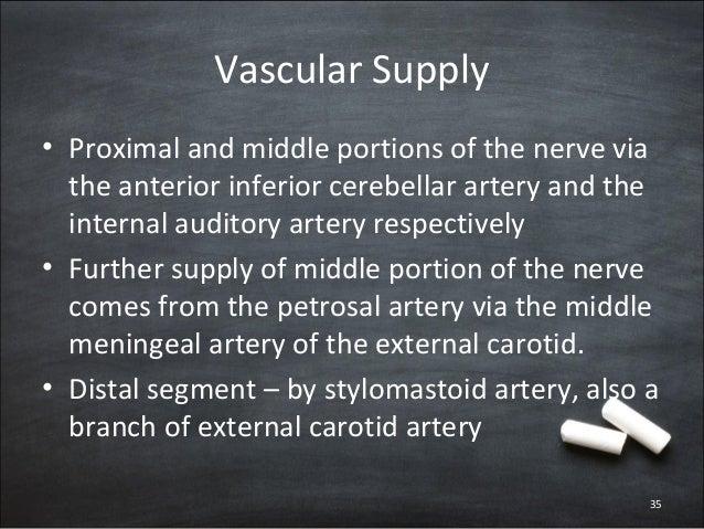 Anatomy Of Facial Nerve border=