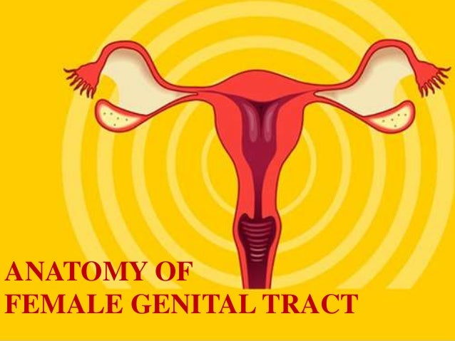 ANATOMY OFFEMALE GENITAL TRACT